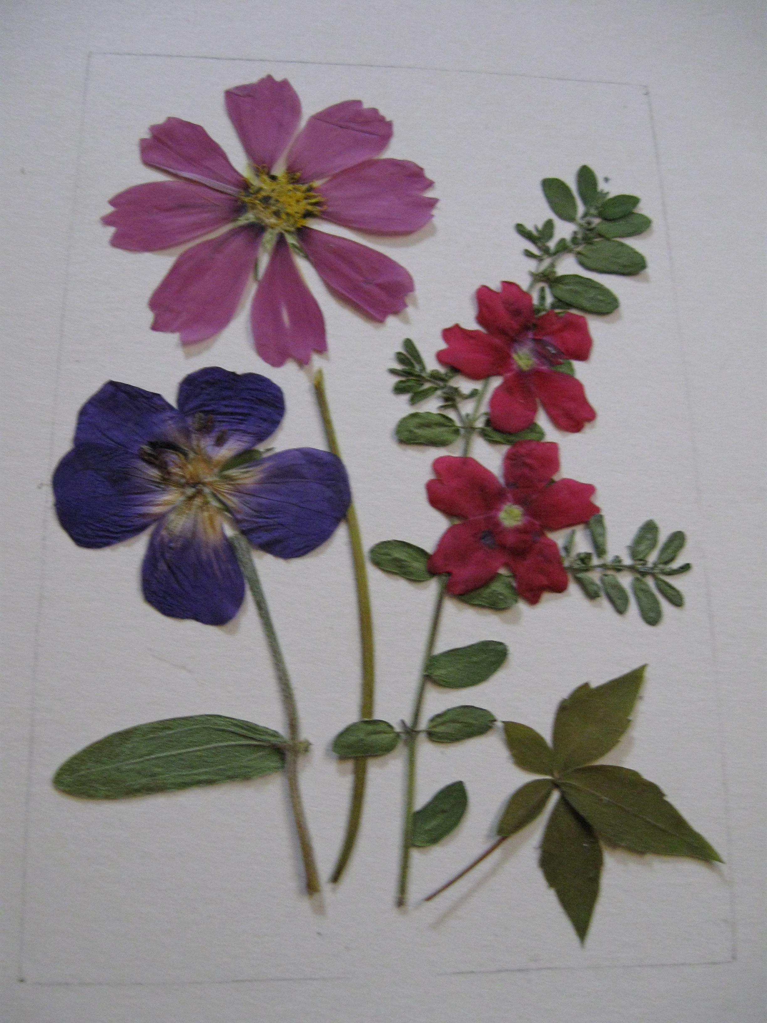 Pressed Flower Designs 7